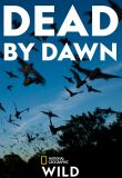 Dead by Dawn - Season 1